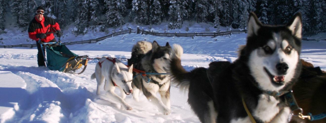 schlittenhunde-zwei-2-1-kopie